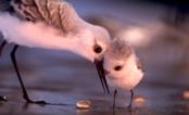 """ALERTA DE FOFURA: Conheça """"Piper"""", o passarinho simpático do novo curta da Pixar"""