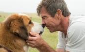 """Cão de """"Quatro Vidas de um Cachorro"""" sofre maus tratos em vídeo dos bastidores do filme"""